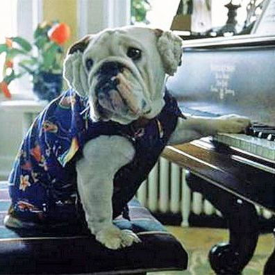 Famous Dogs in Movies and Film, with Images