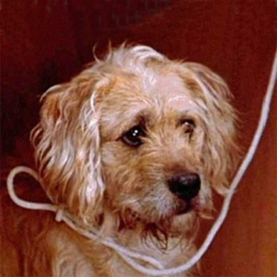 famous dogs in movies and film with images