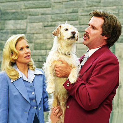What Breed Of Dog Is Baxter From Anchorman