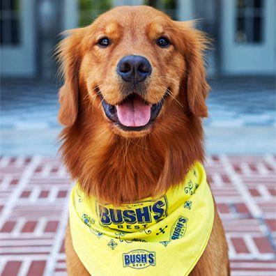 Bush Beans Dog Breed