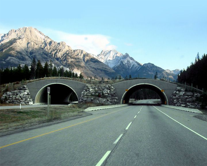 famous streets Trans-Canada Highway